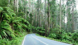 Melbourne things to do - Dandenongs